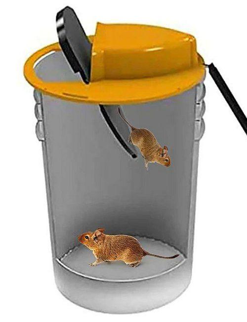 Armadilhas de rato eficazes e sem veneno